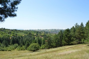 Borova šuma u Banji Vrdnik